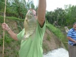 A visitor with his tilapia (this size of this fish is made much larger because it is held near the camera!)